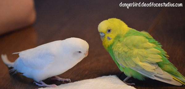 The Danger Bird webcomic birds irl - Danger Bird and White Bird