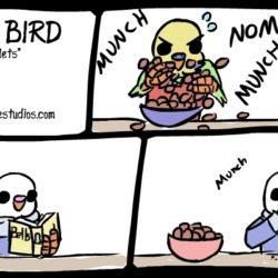 eating pellets
